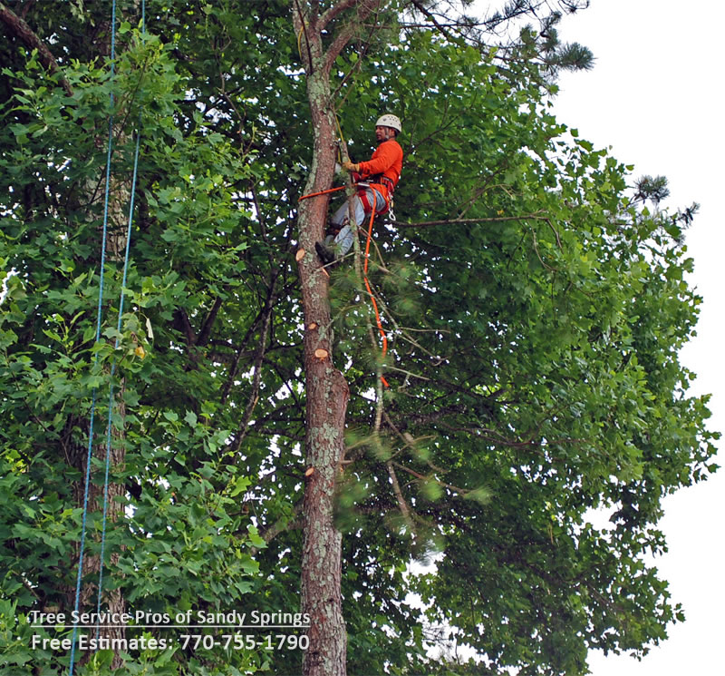 Tree service sandy springs ga removal trimming pruning